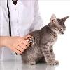 Ветеринарные клиники в Терновке
